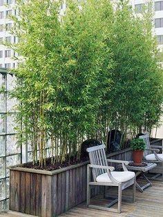 urban garden ideas rooftop bamboo planter
