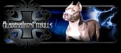 Alabama Iron Pitbulls have some of the best XXL Pitbull Kennels. We are located in Alabama contact us on to get your pitbull. Pitbull Kennels, Pitbull Puppies For Sale, Alabama, Pitbulls, Iron, Neon Signs, Fictional Characters, Pit Bulls, Pitbull