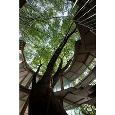 """""""Ring Around a Tree"""" project at kindergarten in Tokyo. Designed by Tezuka."""