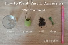 HOW TO PLANT GUIDE, PART 1: SUCCULENTS — Wearable Planter