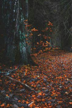 "lsleofskye: ""forest path"" - Travel and Extra Autumn Cozy, Autumn Forest, Dark Autumn, Autumn Feeling, Autumn Witch, Forest Path, The Forest, Forest Floor, Autumn Photography"