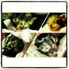 2012 new born fosters