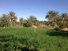 فزان .. واحة التناحمة.. الجنوب الليبي
