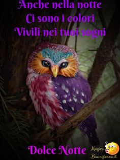 How beautifully flamboyant is this owl! I'd like to find what they call this type of owl where can you find them! Nature Animals, Animals And Pets, Cute Animals, Funny Animals, Funny Birds, Pretty Animals, Baby Animals, Exotic Birds, Colorful Birds