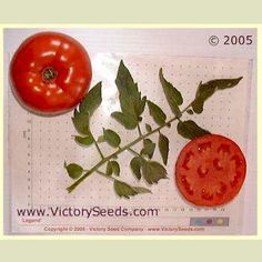 Legend Tomato - 90 days, determinate (Victory) Adapted for the Pacific Northwest and other cool areas.