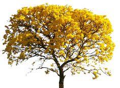 tree\