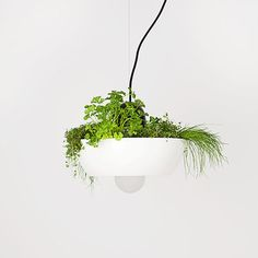 Ramsin Khachi light hanging fixture one of kind planter decor plant indoor garden herbs succulents contemporary green thumb gardener gift ideas plants pendant Herb Garden, Indoor Garden, Indoor Plants, Decorative Planters, Garden Gifts, Shop Lighting, Hanging Lights, Pendant Lamp, Modern Furniture