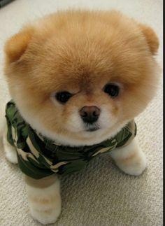 Ik ga in het leger