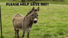 ✏PETITION - China currently imports tens of thousands of donkeys primarily from African nations in order to slaughter them. They do this in order to extract gelatin from the donkey hides. Innocent animals are being shipped overseas and butchered in order to produceejiao, a traditional Chinese medicine with dubious...