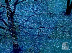 Autumn Tree in Blue, Green, and Purple Photographic Print by Robert Cattan at Art.com