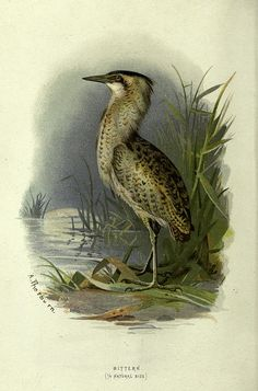 n25_w1150 by BioDivLibrary, via Flickr