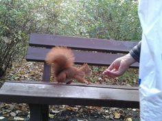 Meine erste Eichhörnchen!