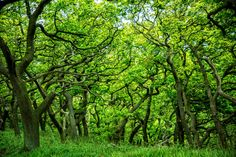 Image result for forest