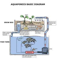 Aquaponics Diagram | Visit my personal DIY Aquaponics setup at http://www.davaoaquaponics.com/blog/