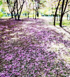 Japanese garden In Roihuvuori, Helsinki