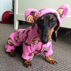 FACEBOOK: Mi perro Salchicha me AMA