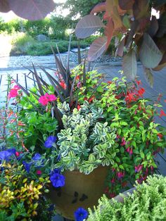 Whether the planting is limited to a small indoor space, a deck pot or even a large yard, understanding of horticulture is crucial in designing the correct combination of plants, those that work together in each unique environment and climate.