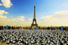 1600隻圓仔三月抵台展出-「紙貓熊展」  誰能比黃色小鴨更療癒?!非圓仔莫屬了! 法國有名藝術家Paulo Grangeon製作了1600隻貓熊模型,擺放在巴黎、羅馬、柏林等地,為瀕臨絕種的物種聲援。目前已經展出超過30多個城市的貓熊作品,將於3月來到台灣,1600隻貓熊加上本土版的200隻台灣黑熊,將在台北市區展出。