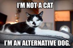 I'm Not a Cat, I'm An Alternative Dog #alternativefacts