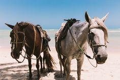 Localizada na Vila do Outeiro, está a 5min de 3 praias: Espelho, Amores e Outeiro. Possui 7 suítes amplas, claras e arejadas, ar condicionado, TV, internet e fr #pousada #Brisasdoespelho #cavalo #passeio #galope