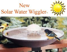 Water Wiggler - This is a bird bath MUST HAVE.  Keeps mosquitoes from laying eggs AND attracts birds!