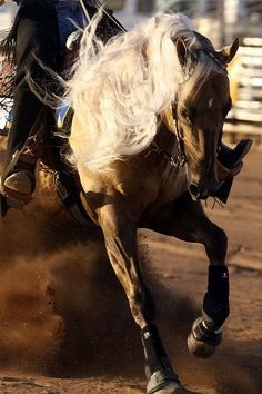 So much fun riding horses that can slide and spin!  Reining is so awesome!!! I would love to really get into this!