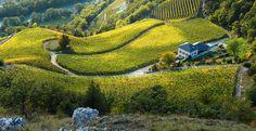 Venez découvrir les vins du Domaine Rouvinez en Suisse, en réservant votre visite sur Wine Tour Booking