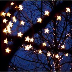 Love the idea of fairy lights in the trees in the woodland and maybe in the field at the bottom... solar powered ones!