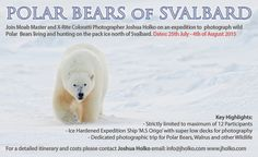 PolarBearsofSvalbard