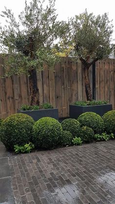 Pergola For Small Backyard Boxwood Garden, Pergola Garden, Outdoor Pergola, Pergola Shade, Diy Pergola, Black Garden, Love Garden, Pergola Decorations, Pergola Ideas