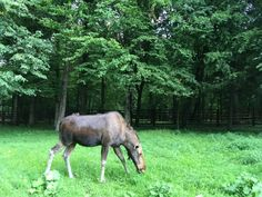Białowieża, primeval forest in a day - Eastern Europe Expat Eastern Europe, Poland, Road Trip, Horses, Nature, Animals, Naturaleza, Animales, Animaux