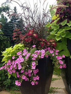 Container gardening is a great way to exercise your green thumb if you only have a deck or balcony for growing plants. These pretty annuals thrive in planter pots, making them perfect candidates for your container garden. Add a big… Continue Reading → Full Sun Container Plants, Container Herb Garden, Container Gardening Vegetables, Container Flowers, Flower Planters, Garden Pots, Flower Pots, Flower Ideas, Full Sun Planters