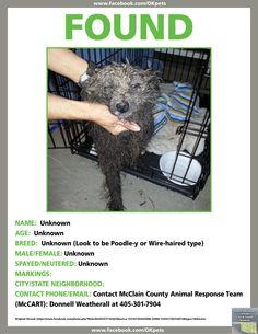 Dog Mix-Breed possible Poodle or Poodle Mix