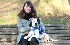 We urgently need more #FosterCarers to provide temporary homes for our #dogs