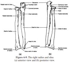 Proximal Radioulnar Joint: articulation between the head