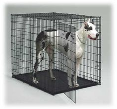 Great Dane in Midwest Solution Series Ginormus Double Door XL Dog Crate Giant Dogs, Big Dogs, Large Dogs, Small Dogs, Xxl Dog Kennel, Pet Kennels, Puppy Kennel, Big Dog Crates, Pranks
