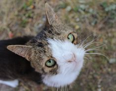 Down Syndrome Cat, Monty The Cat, Cats, Animals, Gatos, Animales, Animaux, Animal, Cat
