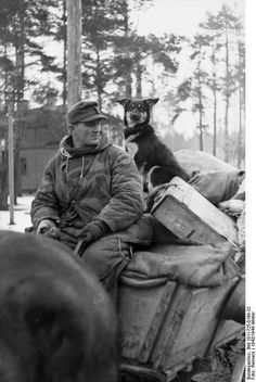 This German soldier found space for his dog on the horse cart during the German retreat in the Lake Peipus region of Finland (February 1944). The retreat was triggered by the Russians breaking the 900-day siege of Leningrad and pushing the German Army Group North to the west. Bundesarchiv Bild 101I-725-0190-22
