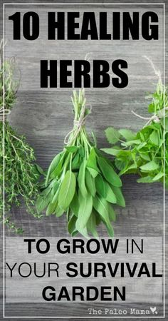 10 Healing Herbs to Grow in Your Survival Garden | www.thepaleomama.com .001