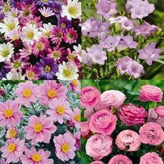 Jardin préféré ancien - 80  plantes et bulbes achetez en ligne sur internet commander vite