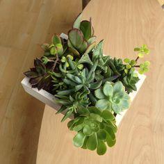 Homemade succulent small vertical garden!!