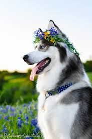 Image result for dogs with flower crowns