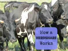 How a Herdshare Works *Ever wondered how people get raw milk without being able to buy it legally? Now you'll know!*