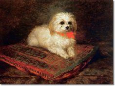 Portrait of a Maltese on a Cushion