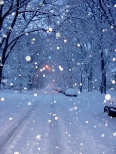 Peaceful snow in Winnipeg Manitoba Canada