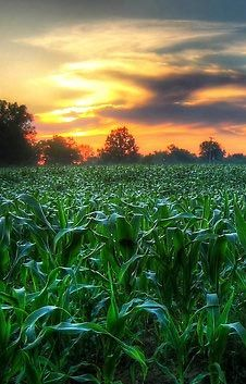 Farming looks mighty easy when your plow is a pencil and you're a thousand miles from the corn field. ~Dwight D. Eisenhower
