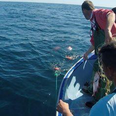 Video fishing alfonsino.   #fishing #flyfishing #fishinglife #fishingtrip #fishingboat #troutfishing #sportfishing #fishingislife #fishingpicoftheday #fishingdaily #riverfishing #freshwaterfishing #offshorefishing #deepseafishing #fishingaddict #lurefishing #lovefishing #fishingboats #instafishing