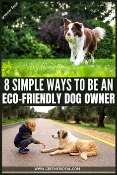 Being an eco-friendly dog owner doesn't just mean that you go for a long hike with your dog each week and remember to clean up after them. There is so much more that we can do with the products that we buy, the services we use, and our own behaviours to do our little bit. And we pull together a list of 8 things you can do that are simple swaps or easy habits to get into to become an environmentally friendly dog owner! #ecofriendly #gogreen #pet #pets #dog #dogowner #friend #greenlivingtips Green Living Tips, Wild Wolf, Go Green, Sustainable Living, Dog Friends, Dog Owners, Simple Way, Climate Change, Sustainability