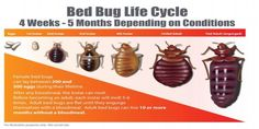 http://midwestbedbugservices.com/bed-bug-heat-treatment/
