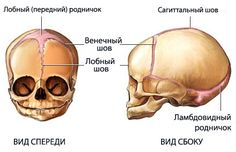 Importance of the fetal skull Largest part of the fetal body. Most frequent [resenting part of the fetus. Least compressible of all fetal parts. Anatomy of the Fetal Skull Cranial Bones The fetal s… Skull Anatomy, Anatomy Drawing, Creature Concept, Anatomy And Physiology, Sculpting, Medical, Drawings, Health, Bones